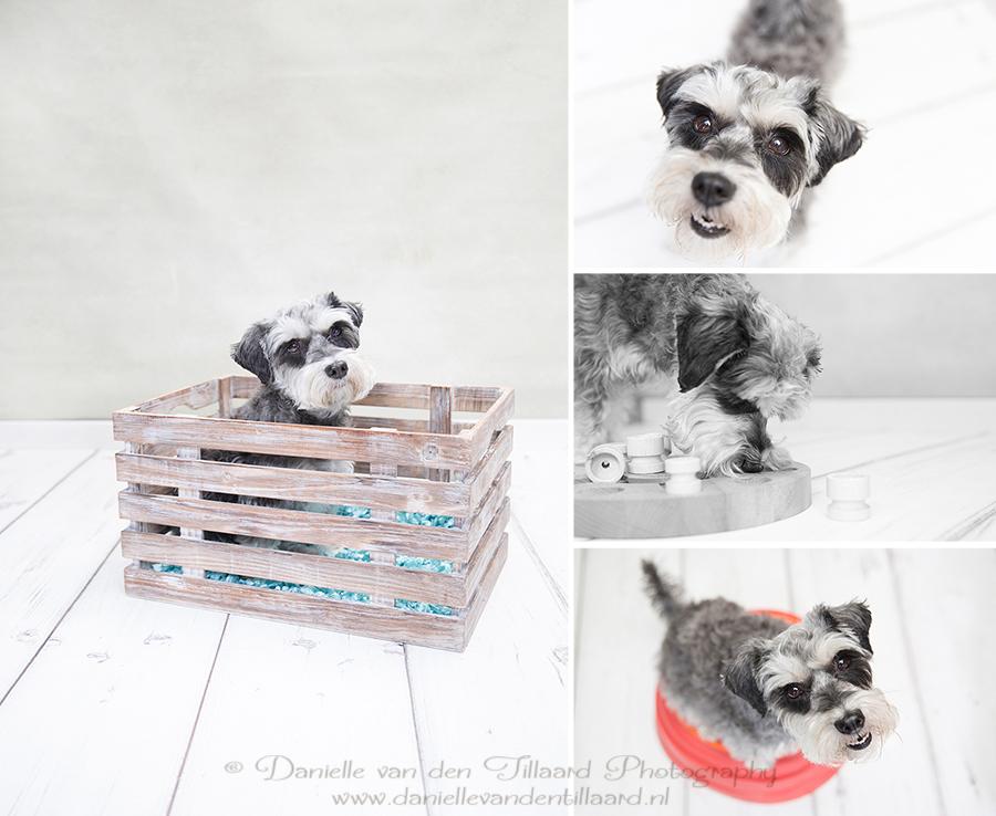 huisdierenfotografie, hondenfotografie, honden fotografie, huisdieren fotografie